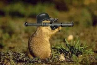 Ready+aim+fire